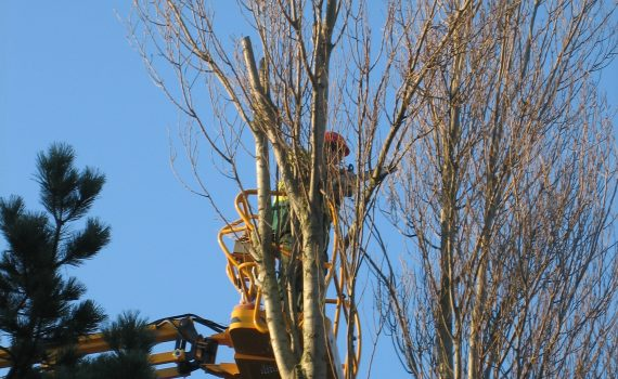 Travaux d'élagage d'arbre en Normandie